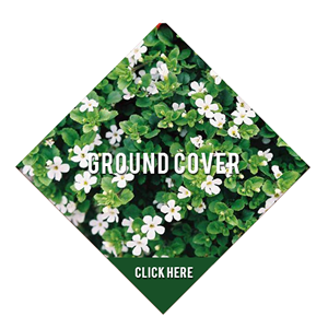 GROUNDCOVER2